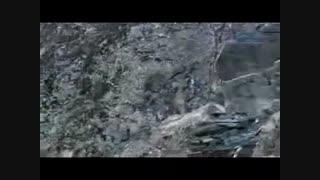 فیلم: بزی که چنگال پلنگ گریخت