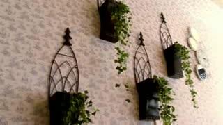 دهکده جنگلی هتل بام سبز رامسر