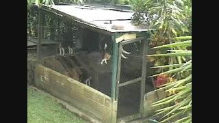 فرار هنرمندانه یک سگ از قفس (خیلی جالب)