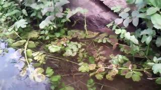کچومثقال-کوچه باغ