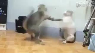 جنگ دو گربه