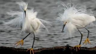 زیباترین پرندگان جهان(سبحان الله و بحمده)