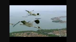 پرواز کنار پرندگان مهاجر(منبع مشرق نیوز)