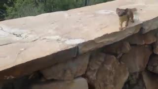 بچه موش خورما ها یی که مادرشون رو دنبال می کنند
