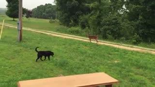 بازی کردن بچه اهو با سگ سیاه جالبههههه