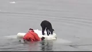 صحنه هایی از کمک انسانها به حیوانات