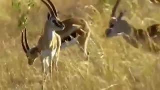 حمله حیوانات2