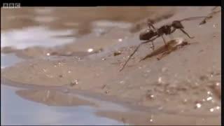 مستند مورچه ها