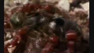 مستند  مورچه ها-2