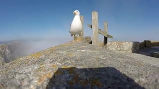 دزدین دوربین فیلم برداری توسط مرغ دریایی
