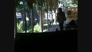 محبوبه من با صدای محسن شکاری