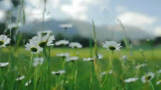 زیبایی های طبیعت در فصل تابستان