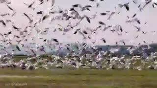 پرندگان در طبیعت