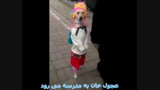 عجول خان به مدرسه می رود