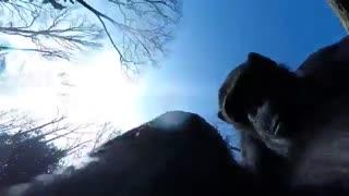 یک شامپانزه هواپیمای بدون سرنشین را سرنگون کرد.(توضیحات)
