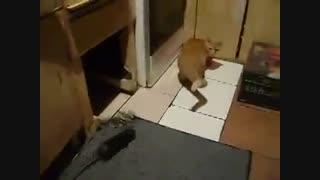 فرار گربه از موش !!!