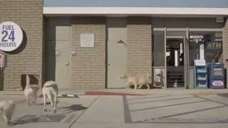 گردش خانوادگی سگ ها !