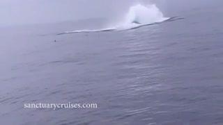 حمله وال آبی به انسان