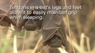 شکل جالب خوابیدن حیوانات