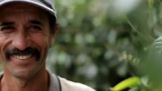 قهوه، از مزرعه تا کافی شاپ