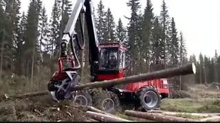 تک تک کردن درختان