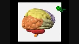 اجزای ساختاری مغز انسان