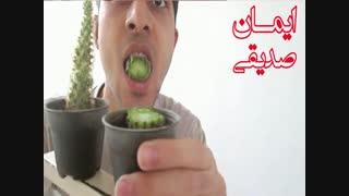 خوردن کاکتوس توسط یک ایرانی!