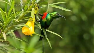 زیباترین پرندگان جهان را ببینید