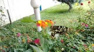 [HD]سرسبز زیبایی های طبیعت بسیار...!!/ TPA