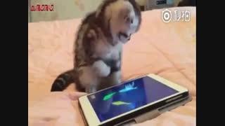 گربه ی ناز