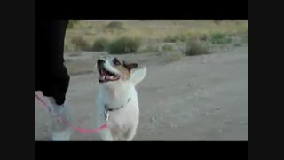 جسی بهترین سگ خانه دار - قسمت اول