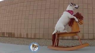 هنرنمایی های تعجب برانگیز جسی  سگ هنرمند