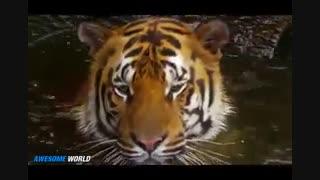 صحنه های دیدنی از حیوانات
