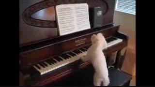 اجرای موسیقی از روی نوت توسط جوکی