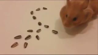 عاشق ترین همستر روی زمین