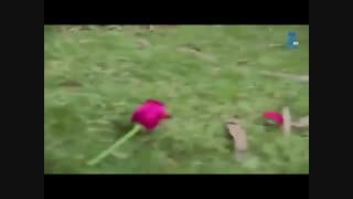 میکس آزاد&ماهیرا (آرمانم اون وسطاس)با آهنگ آرشاوین