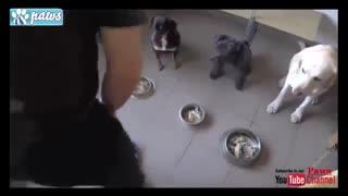 سگهای آموزش دیده و با دیسیپلین!