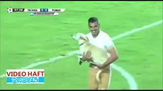 سگ بازیگوش در زمین فوتبال