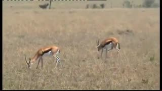 مستند حیات وحش بسیار زیبای کنیا در افریقا(سفر 27 دقیه ای به زیباترین حیات وحش افریقا)