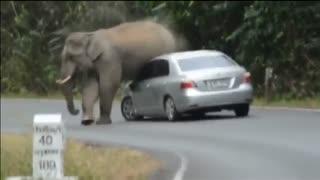 ماشین سواری فیل غول پیکر بسیار دیدنی