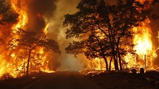 زنگ خطر سازمان ملل: زمین رو به نابودی است
