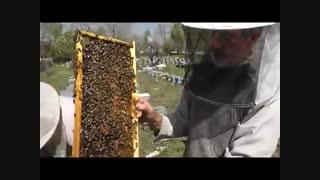 انواع عسل از نظر داشتن موم