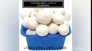 ظروف بسته بندی قارچ در اندازه و رنگ ها ی مختلف