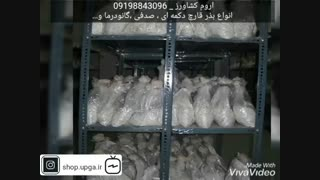 تولید وفروش بذر قارچ های خوراکی