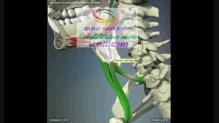 تخصصی ترین مراکز درمان بیماری های حنجره در کرج|گفتار توان گستر البرز09121623463