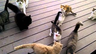 یک روز عادی در زندگی حامیان حیوانات