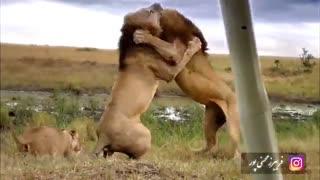 رام کردن شیرها - ویدیو انگیزشی از فریبرز محسنی پور